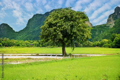In de dag Lime groen Green rice fields beautiful landscape
