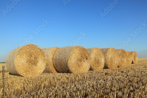 Foto op Aluminium Blauw Bale of rolled straw in wheat field after harvest with blue clear sky