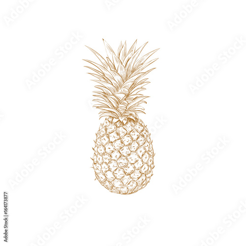 Pineapple sketch vector illustration. Pineapple yellow hand drawing. Wall mural