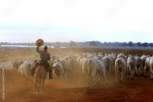 Photo sur Toile Vache Pecuária - Confinamento
