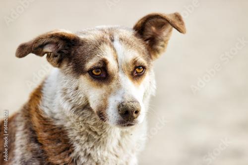 Foto  portrait of mongrel stray dog