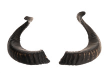 Pair Of Black Ram Horns