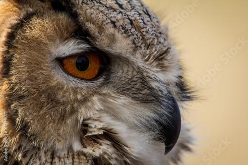 Photo sur Toile Croquis dessinés à la main des animaux Cropped Image Of Owl