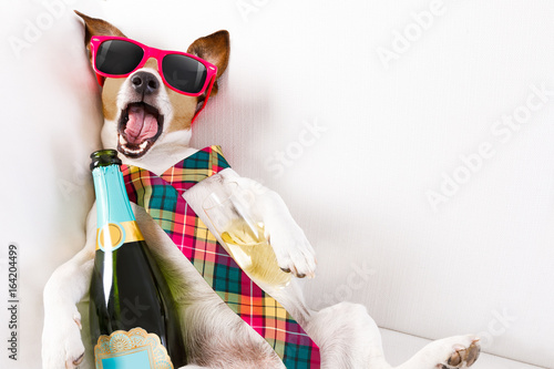 Aluminium Prints Crazy dog drunk hangover dog