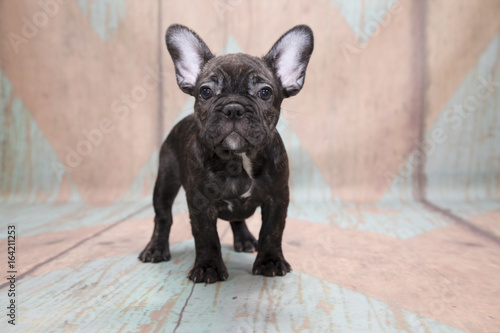 Foto op Aluminium Franse bulldog French Bulldog on a pattern background