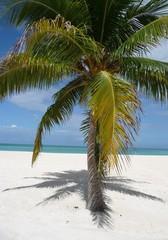 Fototapeta na wymiar Palmen am Strand der Isla Pasion - Cozumel