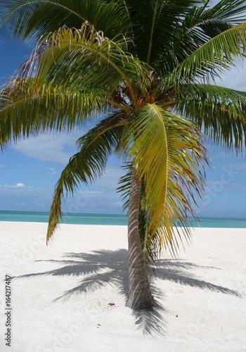 Fototapeta Palmen am Strand der Isla Pasion - Cozumel