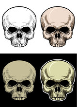 Skull Head Without Lower Jaw Drawing Illustration With 4 Variation Color