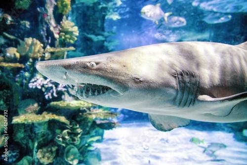 rekin-w-akwarium-tropicarium-budapeszt