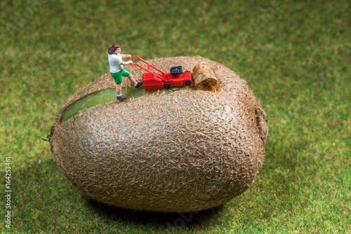 Kleiner Gärtner rasiert die Schale einer Kiwi