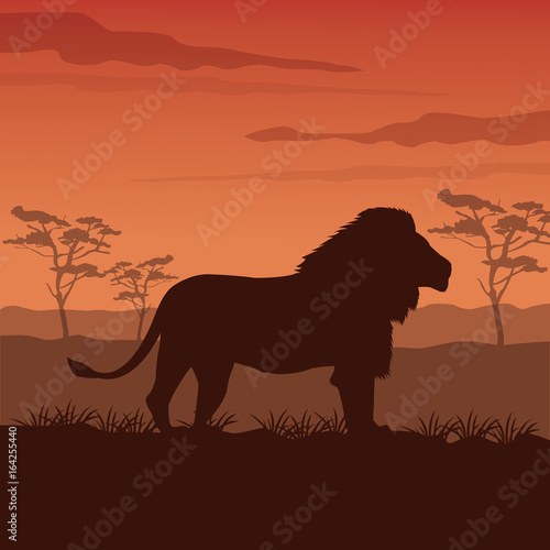 Fototapety, obrazy: color sunset scene african landscape with silhouette lion standing