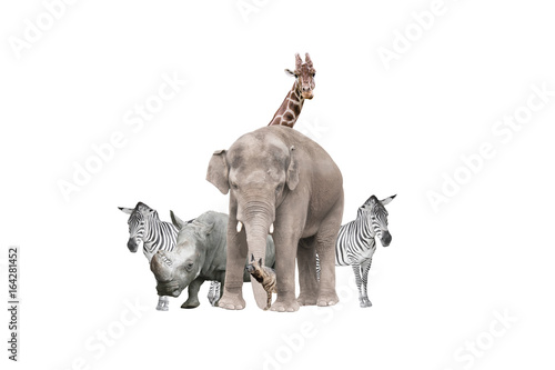 Wild animals on a white background isolated