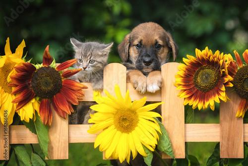 Valokuvatapetti Little puppy with a little tabby kitten in the garden