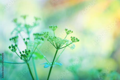 delikatne-zielone-kwiaty
