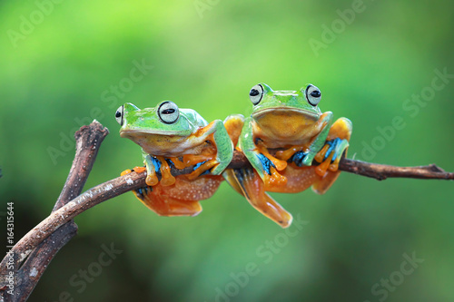 Tuinposter Kikker Tree frog on branch