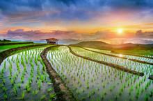 Terrace Rice Field Of Ban Pa Bong Piang In Chiangmai, Thailand.