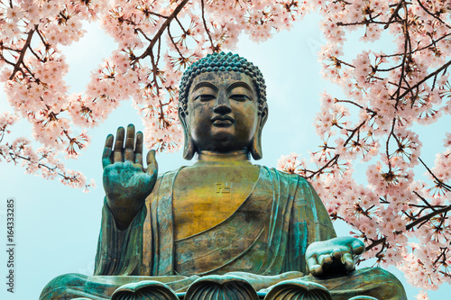 Buddha statue with cherry blossom in Po Lin Monastery, Hong Kong Canvas Print