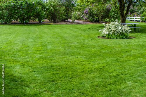Door stickers Grass Green grass lawn and garden