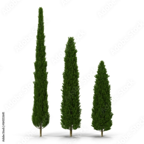 Fotografiet  three cypress trees on white. 3D illustration