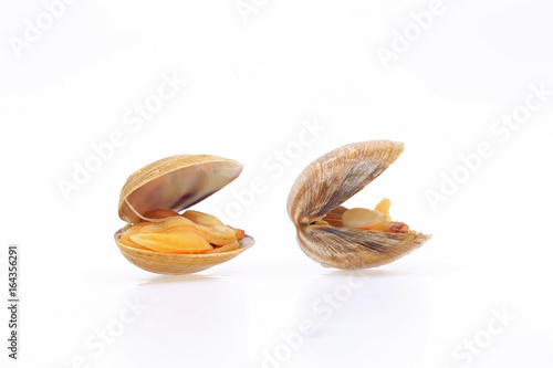 The clam is isolated in a white background Canvas Print