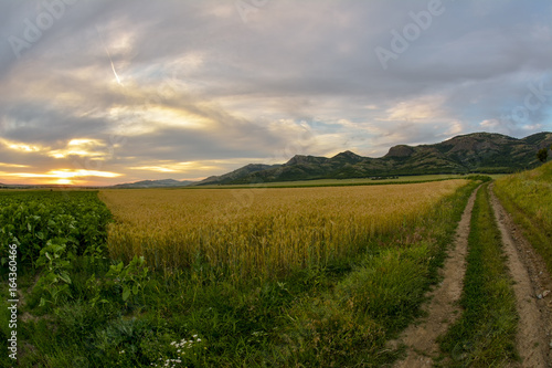 Fotobehang Wit sunset over wheat field