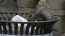 Squirrel Eats Leftover Food Ou...
