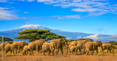 Poster de jardin Elephant Herd of african elephants taken on a safari trip to Kenya with a snow capped Kilimanjaro mountain in Tanzania in the background, under a cloudy blue skies.