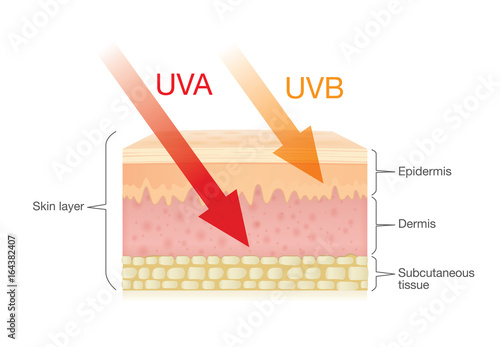 Valokuva  The difference of radiation types in sunlight which is harmful to the skin