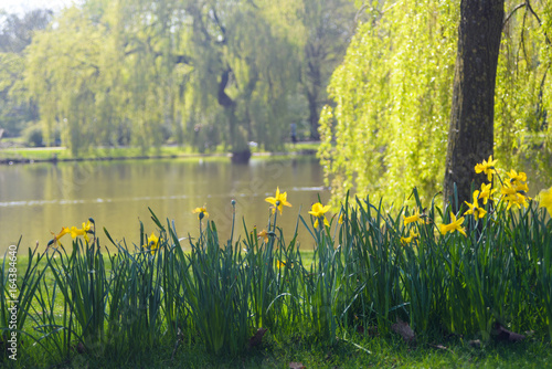 In de dag Bomen yellow flowers with lake background