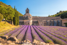 Lavender Fields With Senanque ...