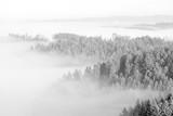 Wald im Nebelmeer vom Bantiger-Turm (bw) - 164395852
