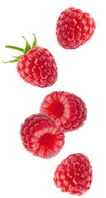 Isolated Flying Berries. Falli...