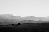 Minimalistyczne zdjęcie dwóch izolowanych małych drzew na szczycie góry, z kilkoma odległymi górami w tle i pustym niebem - 164424056