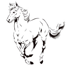 A Galloping Horse. Stock Illustration.