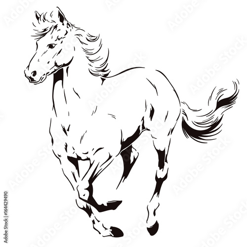 Fotografía  A galloping horse. Stock illustration.
