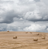 Hay bales under a dramatic cloudy sky on a harvested wheat field. - 164429888