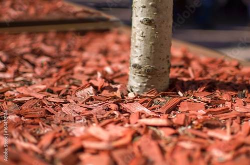 Poster Corail Red mulch used for garden decorating