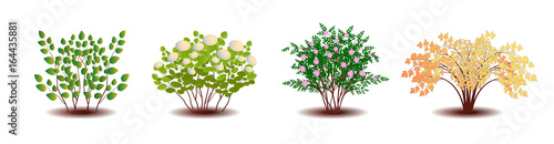Photo  Ornamental shrubs. Isolated on a white background.