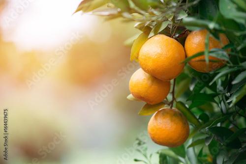 Obraz na plátne fresh orange with flare light