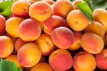 Ripe Apricots Fruit With Leaves Background