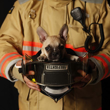 Puppy In Firefighter's Helmet
