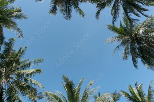 Fototapeta palm leaves frame on blue sky background.
