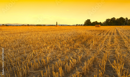 Wheat field harvested with hay bales at sunset - Sezzadio - Alessandria - Italy Canvas Print