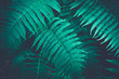 canvas print picture - Nature fern as a background