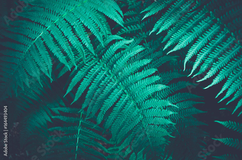 Nature fern as a background
