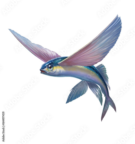 Photo Flying fish jumping and flying on white