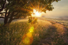 Landscape Rays Of Sun Through Branches Of Tree.  Early Autumn On Morning Sunrise Solar Glare