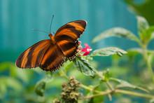 Butterfly In Monteverde