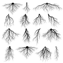 Set Of Tree Roots