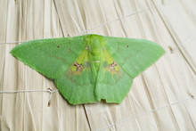 Green Butterfly On A Dry Leaf Hat